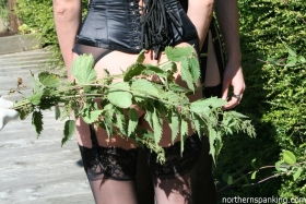 Click to view  Nasty Nettles!